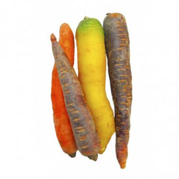 CAROTTES COLOREES (BELGIQUE)